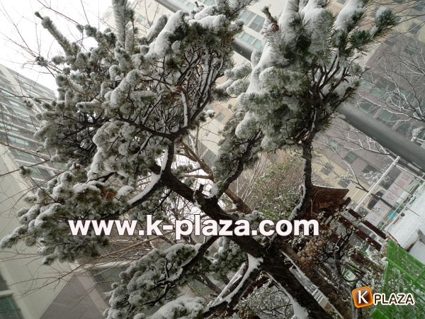 雪のソウルの写真4