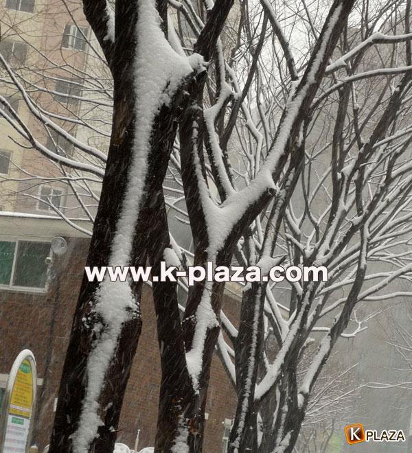 雪のソウルの写真9