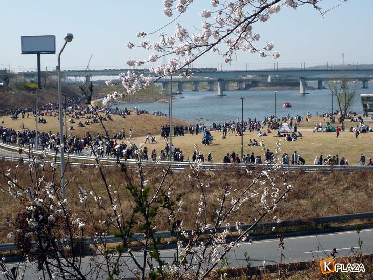 汝矣島-春の花祭り漢江を眺めて