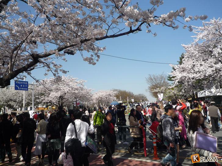 汝矣島-春の花祭り9