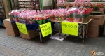 5月8日は韓国はオボイナル(両親の日/父母の日)!駅前はカーネーションでいっぱい