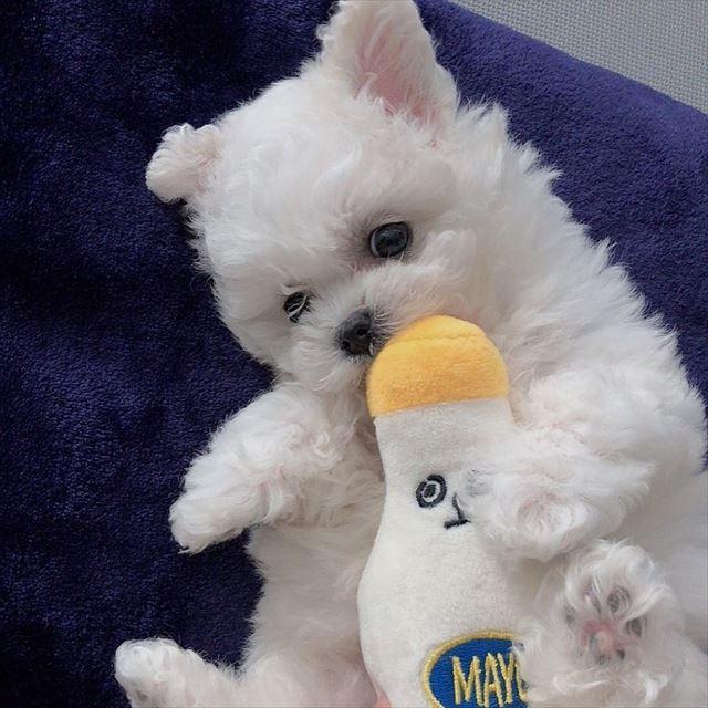 チャンミンの愛犬